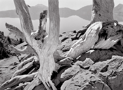 Trees, Lakeside, Crater Lake. Black and white photograph
