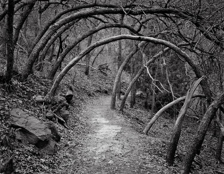 Oak Forest Trail Zion National Park Utah Black And