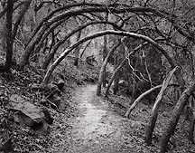Oak Forest Trail, Zion National Park, Utah. Black and white photograph