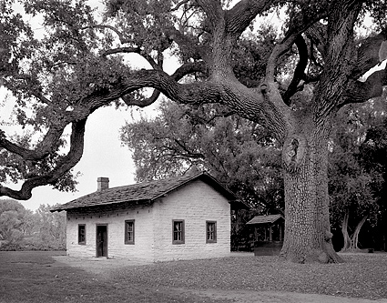 black and white tree photos. Black and white photograph