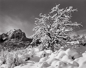 Trailside, First Snow. Utah. Black and white photograph